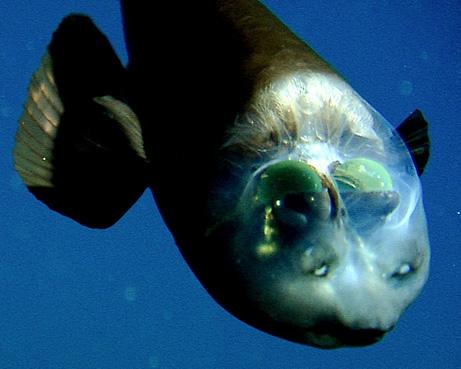 5600 Koleksi Gambar Hewan Dasar Laut HD
